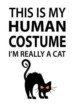 Толстовка I'm really a cat, свитшот I'm really a cat, футболка I'm really a cat